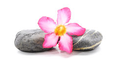 Frangipani And Zen Stone. Zen And Spa Stones With Frangipani Flower Over White Background Stock Photography