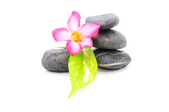 Frangipani And Zen Stone. Zen And Spa Stones With Frangipani Flower Over White Background Royalty Free Stock Images