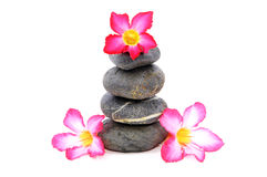 Frangipani And Zen Stone. Zen And Spa Stones With Frangipani Flower Over White Background Royalty Free Stock Photos