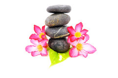 Frangipani And Zen Stone. Zen And Spa Stones With Frangipani Flower Over White Background Stock Images