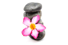 Frangipani And Zen Stone. Zen And Spa Stones With Frangipani Flower Over White Background Royalty Free Stock Photography