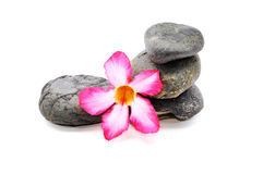 Frangipani And Zen Stone. Zen And Spa Stones With Frangipani Flower Over White Background Stock Photo