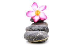 Frangipani And Zen Stone. Zen And Spa Stones With Frangipani Flower Over White Background Royalty Free Stock Photo