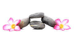 Frangipani And Zen Stone. Zen And Spa Stones With Frangipani Flower Over White Background Stock Photos