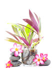 Frangipani And Zen Stone. Zen And Spa Stones With Frangipani Flower Over White Background Royalty Free Stock Image