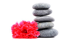 Frangipani And Zen Stone. Zen And Spa Stones With Hibiscus Flower Over White Background Royalty Free Stock Photo