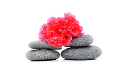 Frangipani And Zen Stone. Zen And Spa Stones With Hibiscus Flower Over White Background Royalty Free Stock Photography