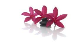 Frangipanibloem met zenrotsen met witte achtergrond Stock Foto