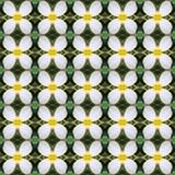 Frangipanibloemen, een boeket van naadloze bloemen royalty-vrije illustratie