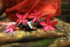 Frangipanibloemen en Boedha in vrede Royalty-vrije Stock Afbeelding