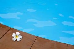 Frangipanibloemen in zwembad Royalty-vrije Stock Foto