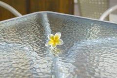 Frangipaniblomma på den glass tabellen Royaltyfri Foto