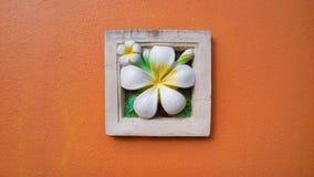Frangipaniblommastuckatur på den orange väggen Arkivbild