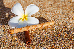 Frangipaniblume auf sandigem Boden mit süßem Geschmack Lizenzfreie Stockfotos