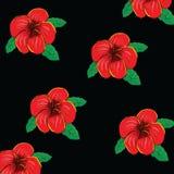Frangipaniblume backgreund Stockfotos