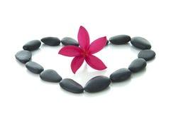 Frangipaniblume mit Zen schaukelt mit weißem Hintergrund Lizenzfreies Stockbild
