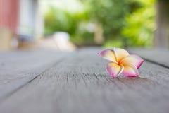 Frangipaniblumen auf Holzfußboden Lizenzfreies Stockfoto