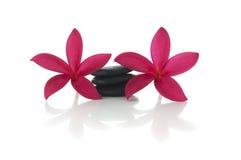 Frangipaniblumen mit Zenfelsen Stockfotografie