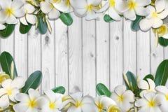 Frangipaniblumen und Blattrahmen auf weißem Holzfußbodenhintergrund Lizenzfreie Stockfotos