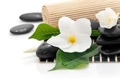 Frangipaniblumen und -steine Lizenzfreies Stockbild