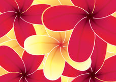 Frangipaniblumenhintergrund Stockbild