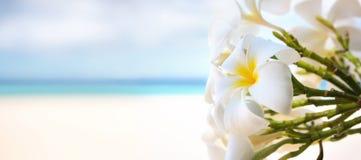 Frangipanibusch mit einem hellen tropischen Meer im Hintergrund Lizenzfreie Stockfotos