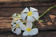 Frangipanien blommar, eller Plumeria blommar för sunt och vitamin C och brunnsorten Royaltyfria Foton
