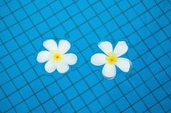 Frangipanis en piscina Foto de archivo libre de regalías