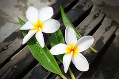 Frangipanis flowers Stock Photo