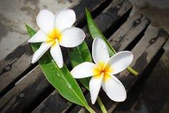 Frangipanis flowers Stock Photo