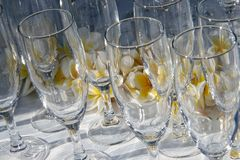 Frangipanis & Glasses royalty free stock photos