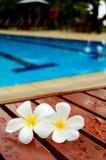 Frangipanis pela piscina Foto de Stock