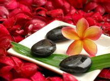 Frangipanis and therapy stones Stock Images