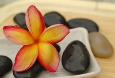 Frangipanis and therapy stones. In China porcelain Stock Photography