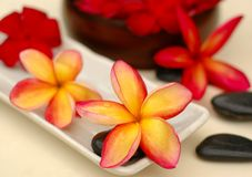 Frangipanis and therapy stones Stock Photo