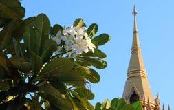 Frangipaniträd med den thai templet Arkivfoton