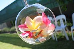 Franhipani in Glas Stock Foto