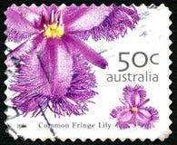 Franja comum Lilly Australian Postage Stamp foto de stock royalty free