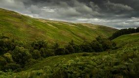 Franja de los árboles que cortan el paisaje Imagenes de archivo