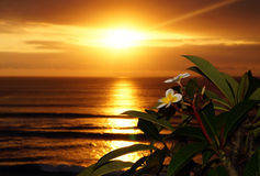 Franjipani au coucher du soleil Photos stock