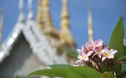 Franjipani devant le temple thaïlandais Photographie stock