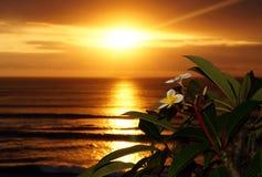 Franjipani en la puesta del sol Fotos de archivo