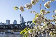 Frankfurt germany cherry blossom Stock Photography