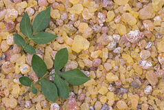 Frankincense Boswellia Papyrifera, resin and leaves, Incense f Royalty Free Stock Photos