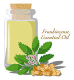 Frankincense Essential Oil. Bottles with essential oil of incense with a branch and aromatic resin on the background Royalty Free Stock Photography