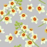 Frankincense kwiatu bezszwowy deseniowy wektor Boswellia drzewa kwiaty Fotografia Royalty Free