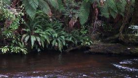 Franklin flod som är skattskyldig i Tasmanien arkivfilmer