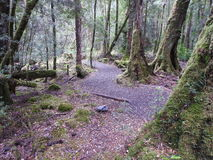 Franklin-Gordon Wild Rivers National Park, Tasmânia Foto de Stock