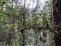Franklin-Gordon Wild Rivers National Park, Tasmania Royalty Free Stock Images