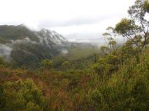 Franklin-Gordon Wild Rivers National Park, Tasmania Royalty Free Stock Image